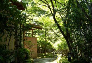 梅の花 太宰府別荘自然庵 写真3