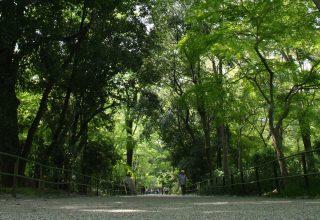 3万6千坪にも及ぶ糺の森に鎮座する下鴨神社の長い参道。森に囲まれた気持ちの良い空間。