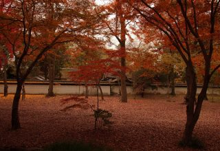 紅葉が鮮やかな季節の式も人気。一年中、四季折々の表情が多くの参列者を虜に。